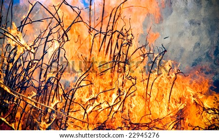 The green dry grass is grasped by fire flame
