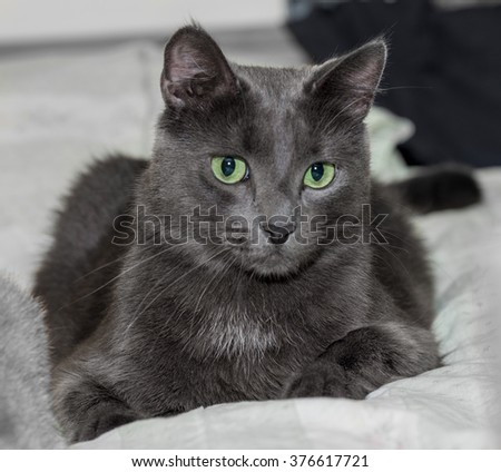 The green-eyed black cat