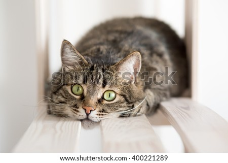 The green-eyed striped cat lies on the shelf and attentively looks at a chamber - stock photo