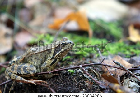 The green frog sits on sheet living in a habitat - stock photo