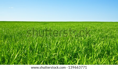 The green grass on the background of the blue sky - stock photo