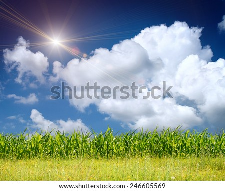 the green grass on the field with sky - stock photo