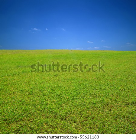 The green grass stretching to the horizon and blue sky with little clouds. Nature background for any purpose - stock photo