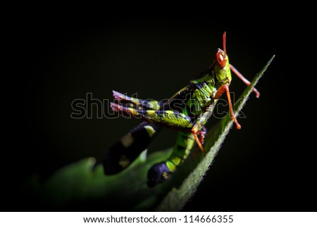 The green grasshopper perched on a green leaf