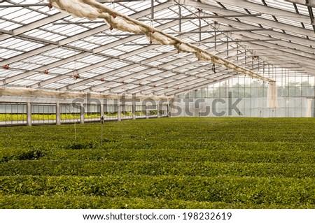 The green house for growing green tea, SHizuoka, Japan - stock photo