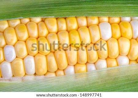 The green husk is partially removed to reveal yellow and white bi color sweet corn on the cob. - stock photo