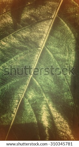 the green leaf is texture for the background in the work