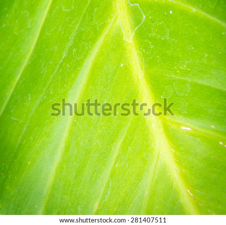 the green leaf on the nature