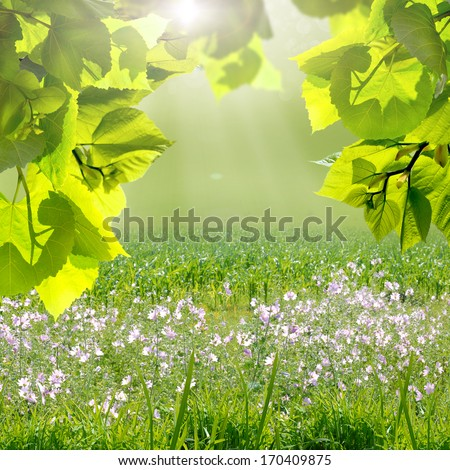 the green leaves and sun on blue sky - stock photo