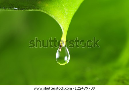The green leaves of water droplets - stock photo