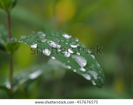 The green leaves with the clear raining beads