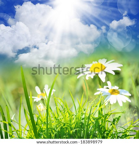 the green nature background at summer