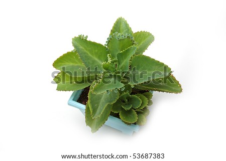 The green plant in the pot isolated on white
