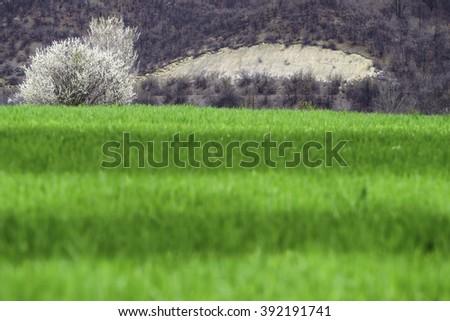 the green season  - stock photo