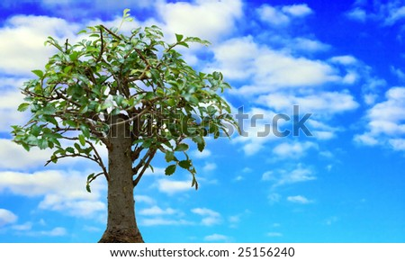 The green tree against summer sky in a sunny day - stock photo