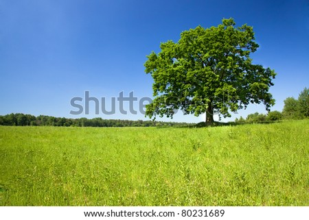 The green tree growing in the field on which the grass grows