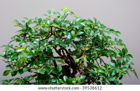 The green tree on grey background - stock photo