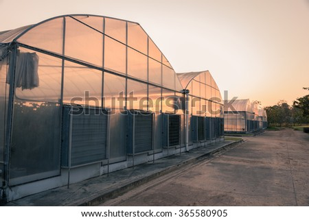 The greenhouse with sunset background - stock photo