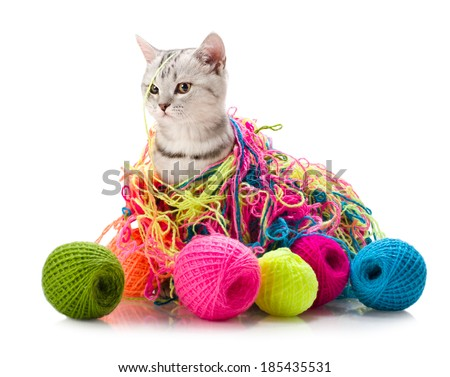 the grey  beautiful little  kitten play with  many multi-coloured clew,  on white  background , isolated - stock photo