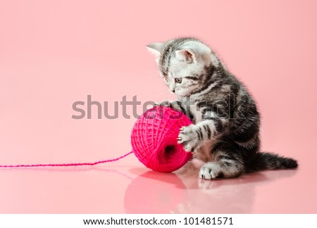 the grey  beautiful little  kitten with  many multi-coloured clew,  on pink  background , stare look on camera - stock photo