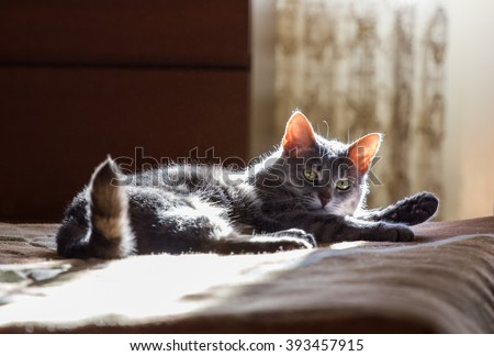 the grey cat lays on a bed in solar beams - stock photo