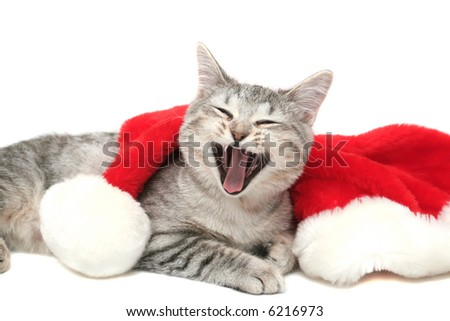 The grey cat yawns near to a New Year's cap