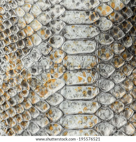 The grey snake skin texture - stock photo