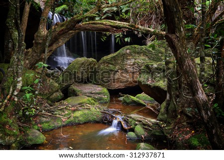 The Grotto falls at Fitzroy Falls within Morton National Park, the largest in NSW.  A bushwalk to the Grotto, a tranquil area with lush undergrowth, moss covered rocks and the sounds of nature  - stock photo