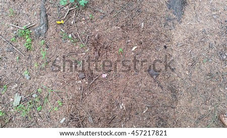 The ground in the forest covered with withered pine needles from the trees - stock photo