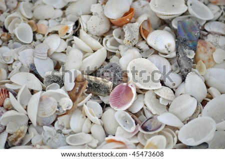 the ground of the beach at sanibel island, florida - stock photo