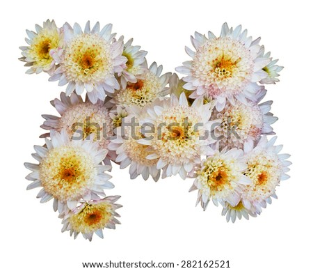 The group chrysanthemum flowers closeup isolated on white background - stock photo