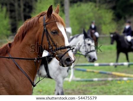 The group of horses before contest of jumps by hindrances - stock photo