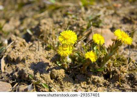 The group of yellow flowers