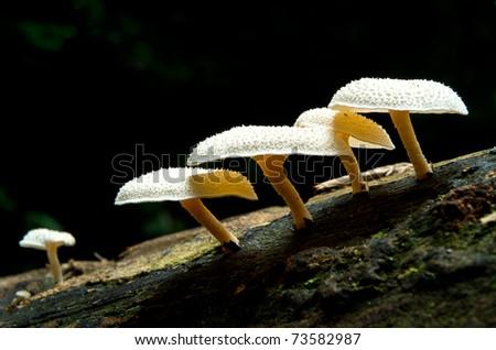 The groups of wild mushroom - stock photo