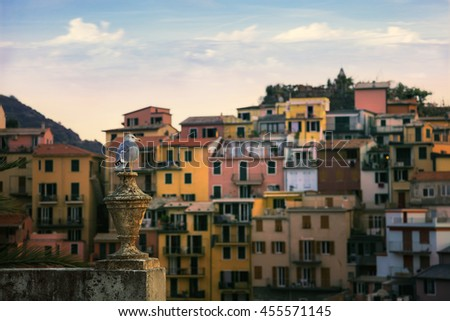The Guardian Gull, Cinque Terre, Italy  - stock photo