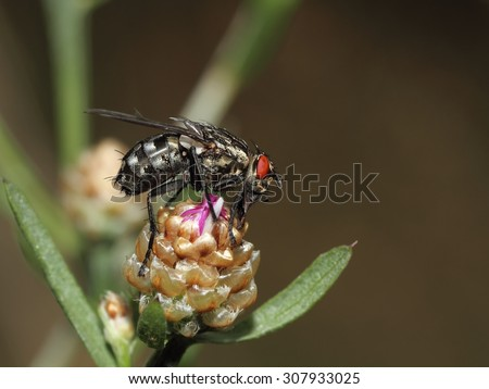 The hairy fly on the flower. - stock photo