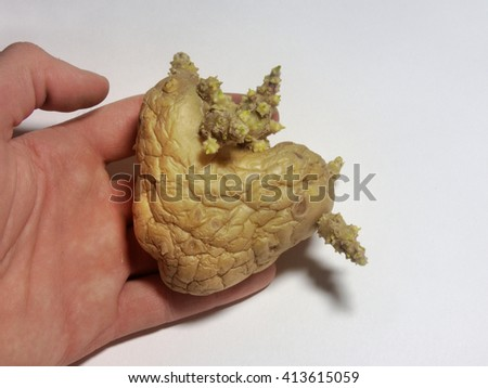 The hand holding a potato in the shape of a heart - stock photo