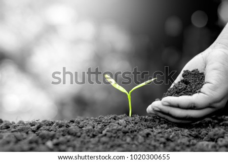 The hand of a children are planting the seedlings into the soil, black and white tone.