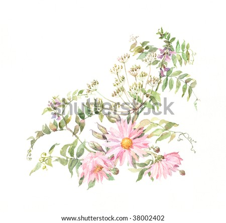 The hand painted watercolor of pink chrysanthemums with grass. - stock photo