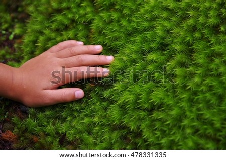 The hands of the children to touch the moss
