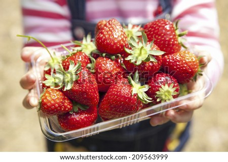 The Harvest Of Strawberry Collection