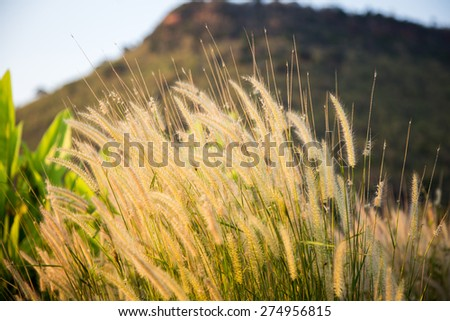 The hay is on a tree. - stock photo