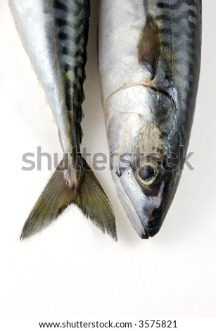 the head and tail of a mackerel - stock photo