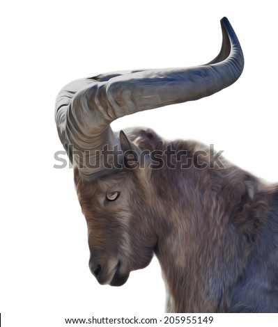 The head in profile of East Caucasian tur male, Capra cylindricornis, isolated on white background. Side face animal portrait of the wild mountain goat. Amazing illustration in oil painting style. - stock photo