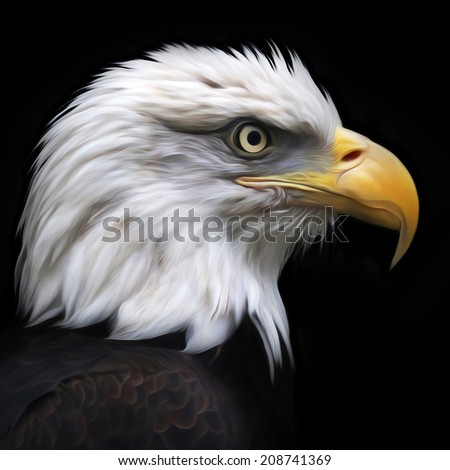 The head of a bald eagle, haliaeetus leucocephalus, isolated on black. Side face portrait of American eagle, US national character. Amazing illustration. Great for user pic, icon, label, tattoo.  - stock photo