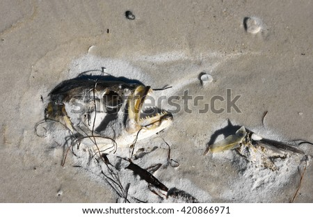 The head of a dead fish laying on the beach - stock photo