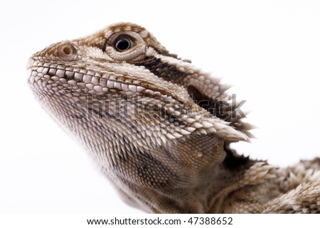 The head of a lizard. The lizard looks up - close up view