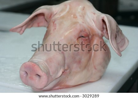 The head of a pork lying on the butcher´s desk. Focus on the nose. Shallow depth of field. - stock photo