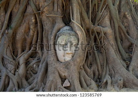 The head of Sandstone Buddha in Tree Roots at Wat Mahathat, Ayutthaya, Thailand. This is one of the UNESCO world heritage.