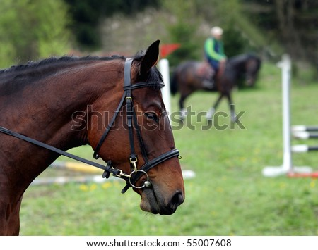 The head of the horse against the background of contest of jumps by hindrances